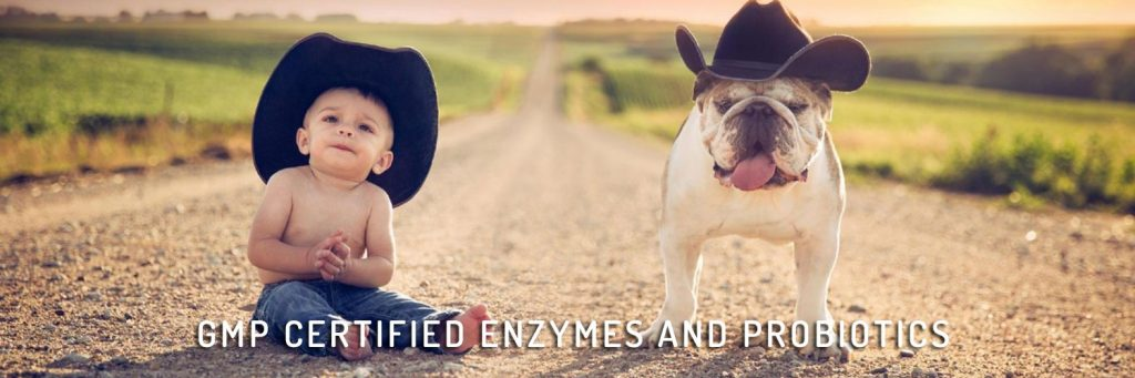 GMP Certifiied Enzymes And Probiotics